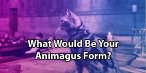 Animagus Quiz: What Would Your Form Be?